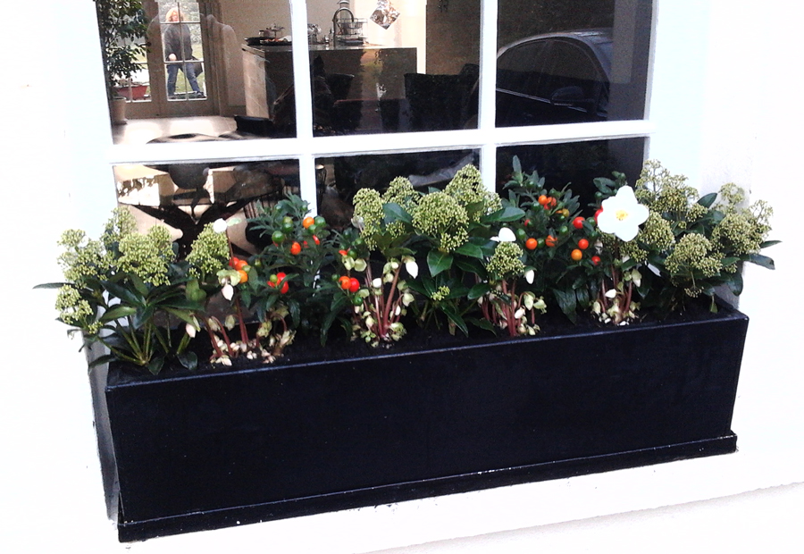 christmas windowbox Highgate