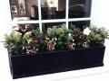 christmas windowbox Highgate