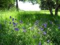 Labranon back garden