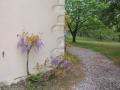 Labranon side garden